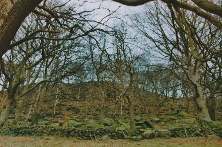 Edit 10 Woodland Wide
