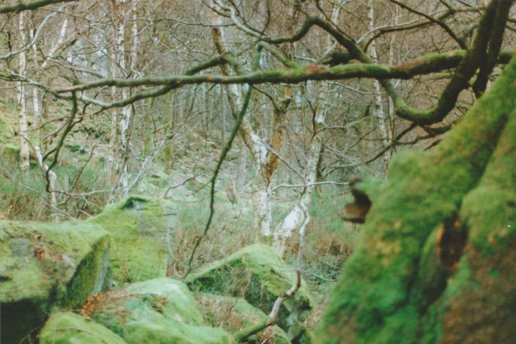 Edit 7 Woodland Scene